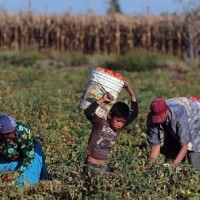 Jornaleros michoacanos y sus familias contarán con programa de apoyo