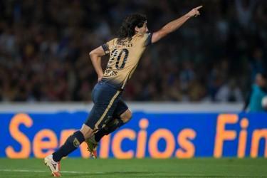 Tigres Campeón.