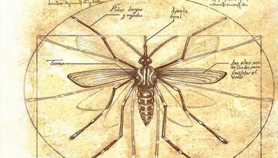 Mosquito Transmisor de enfermedades