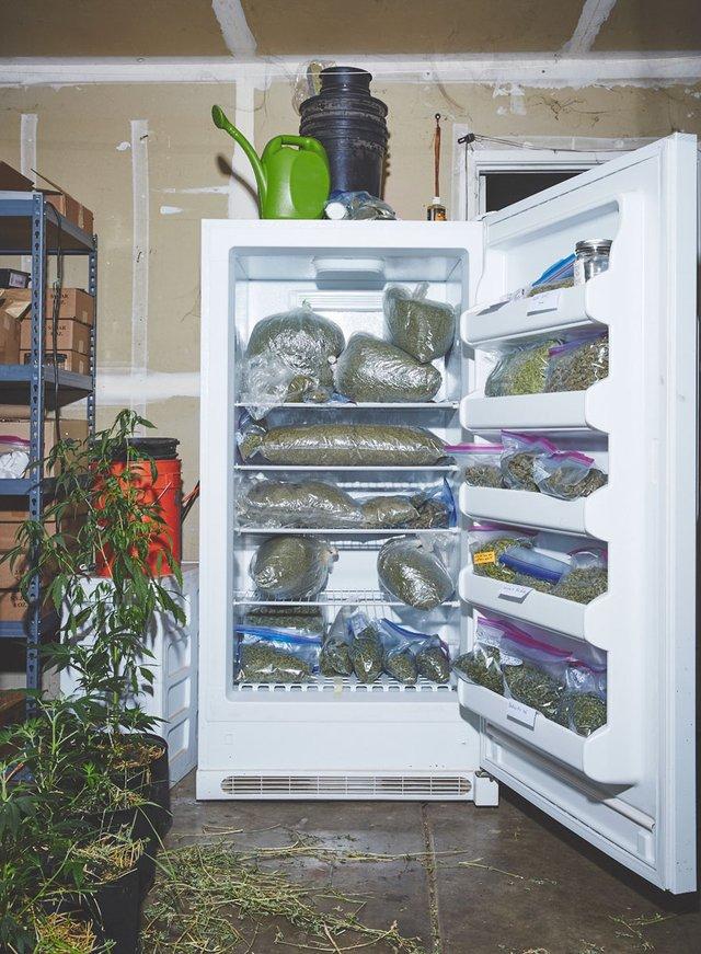 Monjas cultivan mariguana (1)