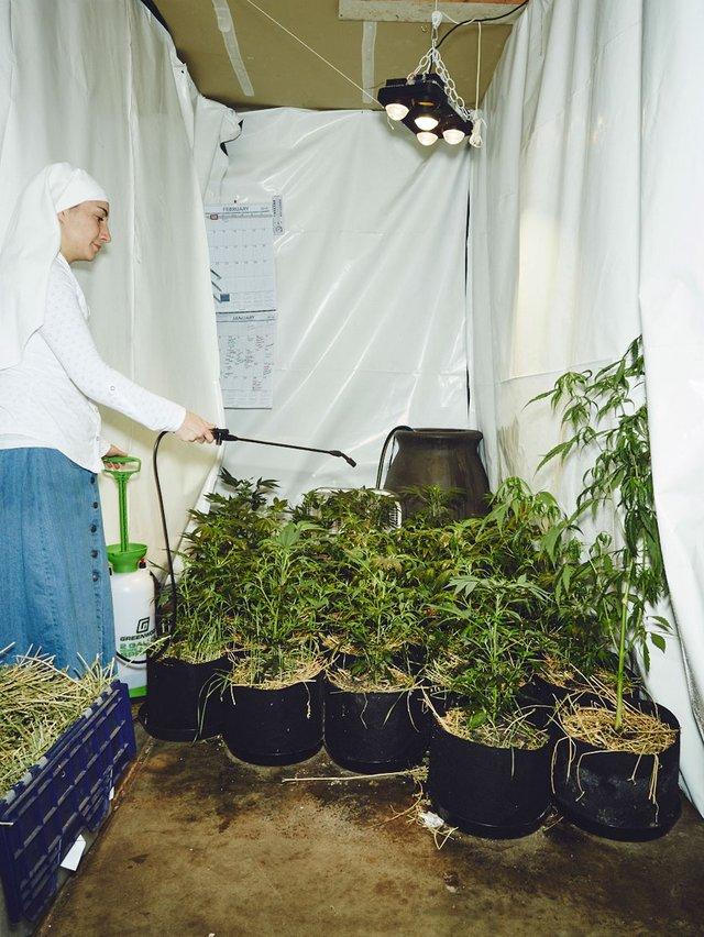 Monjas cultivan mariguana (12)