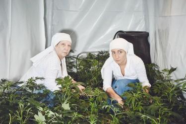 Monjas cultivan mariguana (3)