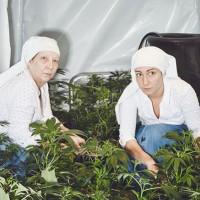 Nueva Jersy va por el uso recreativo de la Mariguana