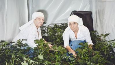 Monjas cultivan mariguana para el mundo