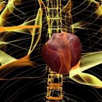 Médicos lograron resucitar un corazón que ya no podía latir (Video)