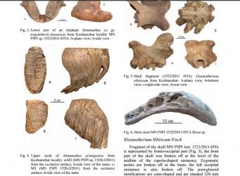 """Restos encontrados del """"unicornio siberiano"""""""