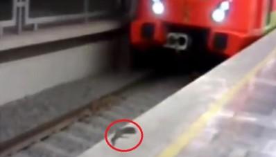 serpiente en metro