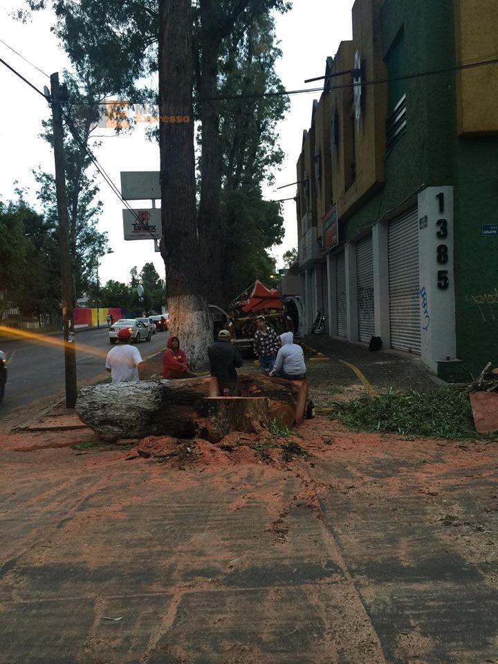 Vecinos de Morelia denuncian tala de árboles gigantes sobre Ventura Puente; Ayuntamiento omiso