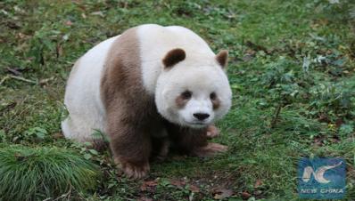 panda-cafe