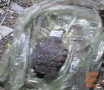 granada activa en Morelia