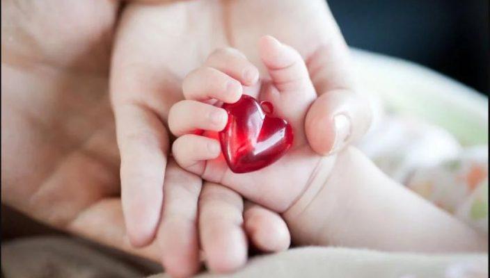 Células madres fueron transformadas en células sanguíneas primordiales
