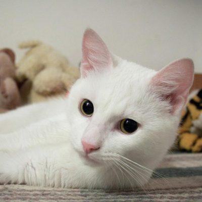 Enojada porque mato a su gato, descuartiza al que lo hizo en Rusia
