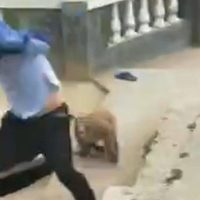 En China, mono busca venganza después de ser agredido por un turista (Video)