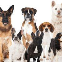 Salir de paseo con tu mascota puede mejorar en un 90% tu calidad de vida