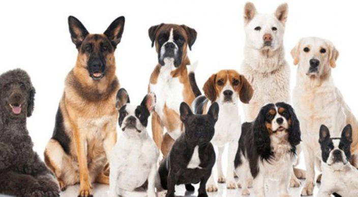 Demuestran que un año humano no equivale a 7 años de perro