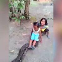 Video de niñas jugando sobre una serpiente pitón causa indignación en la red