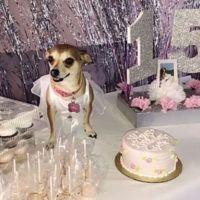 En Estados Unidos, joven organiza fiesta de XV años a su perrhija