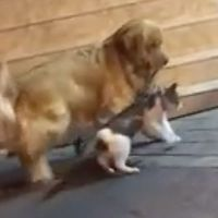 Circula en redes el video de un perro que evita pelea entre gatos