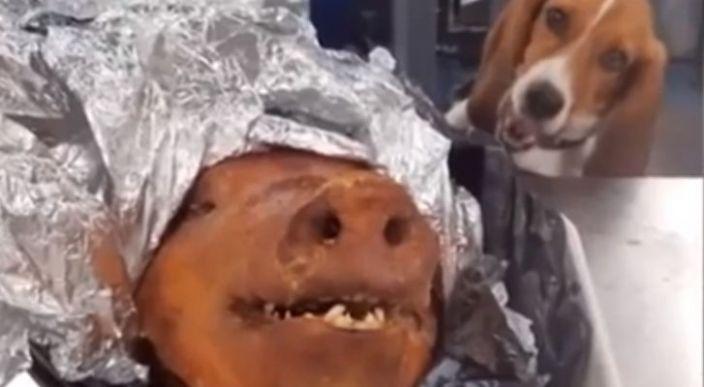 Confiscan cabeza de cerdo en el aeropuerto y el más feliz es el perro de la brigada de inspección
