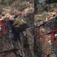 Indigna video cuando un cazador manda a un barranco a sus perros de presa y estos caen