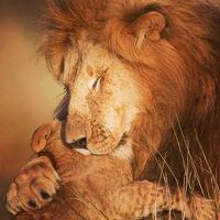 Fotografía de león y su cachorro enternece las redes sociales