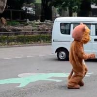 Graban simulacro en un zoo sobre como actuar cuando escapan leones, mientras estos observan (Video)