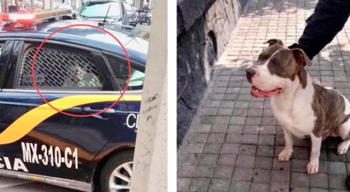 Policía secuestra a un perro y pide por su rescate 2 mil 500 pesos en México