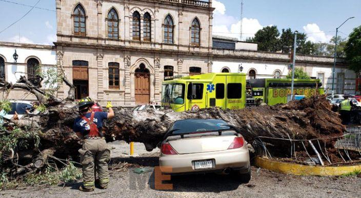 Cae árbol sobre un auto en la Calzada Ventura Puente de Morelia