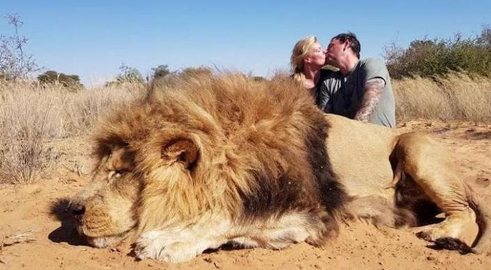 Pareja se besa mientras se toman una foto con el león que acaban de matar