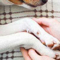 Llevarán en Morelia taller de tanatología dedicado a dueños de mascotas