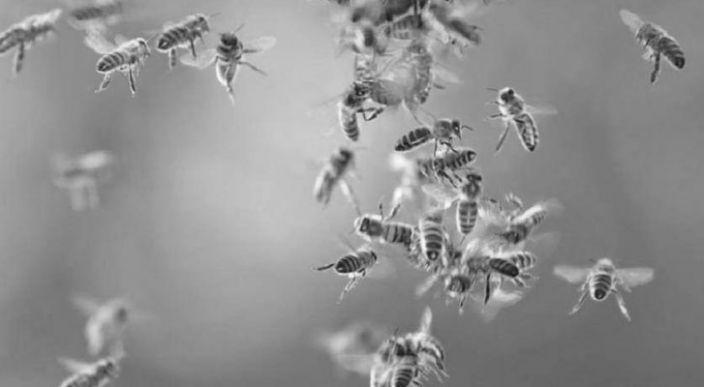 Fallece un hombre al ser atacado por abejas africanizadas, en Los Reyes, Michoacán