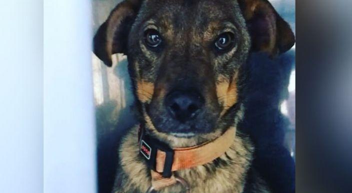 En Ecuador, más de 20 perros rescatados por distintas fundaciones mueren envenenados por alimento donado