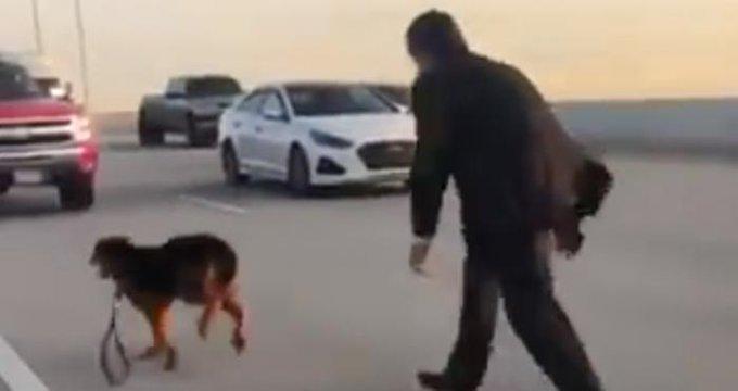 Tráfico se detiene para que rescaten a un perro en la carretera de Houston (Video)