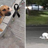 Indigente se hinca y llora por su perro atropellado en Av. Camelinas, Morelia