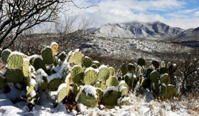 Fotografía/Periódico Frontera de Tamaulipas