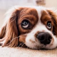 Veterinarios de la UNAM aclaran si tus mascotas podrían trasmitirte el covid-19
