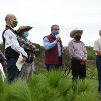 Morelia ya tiene certificado para exportar aguacate: APEAM