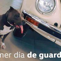 """""""Vochita"""" la perrita parte del equipo de seguridad de una Agencia Volkswagen en México"""