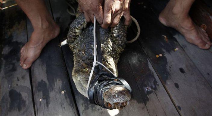 Capturan y cocinan a un cocodrilo en venganza por atacar a un pescador