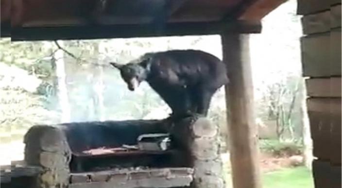 Oso entra en una casa y se lleva un trozo de carne en Santiago, NL (Video)