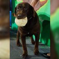 """La historia del perrito que vive en Iztapalapa al que le apodan """"el Conchas"""" por su pan favorito"""