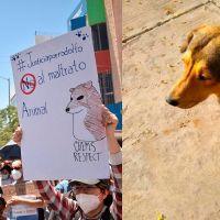 Marchan en Sinaloa para pedir justicia por el perrito Rodolfo (video)
